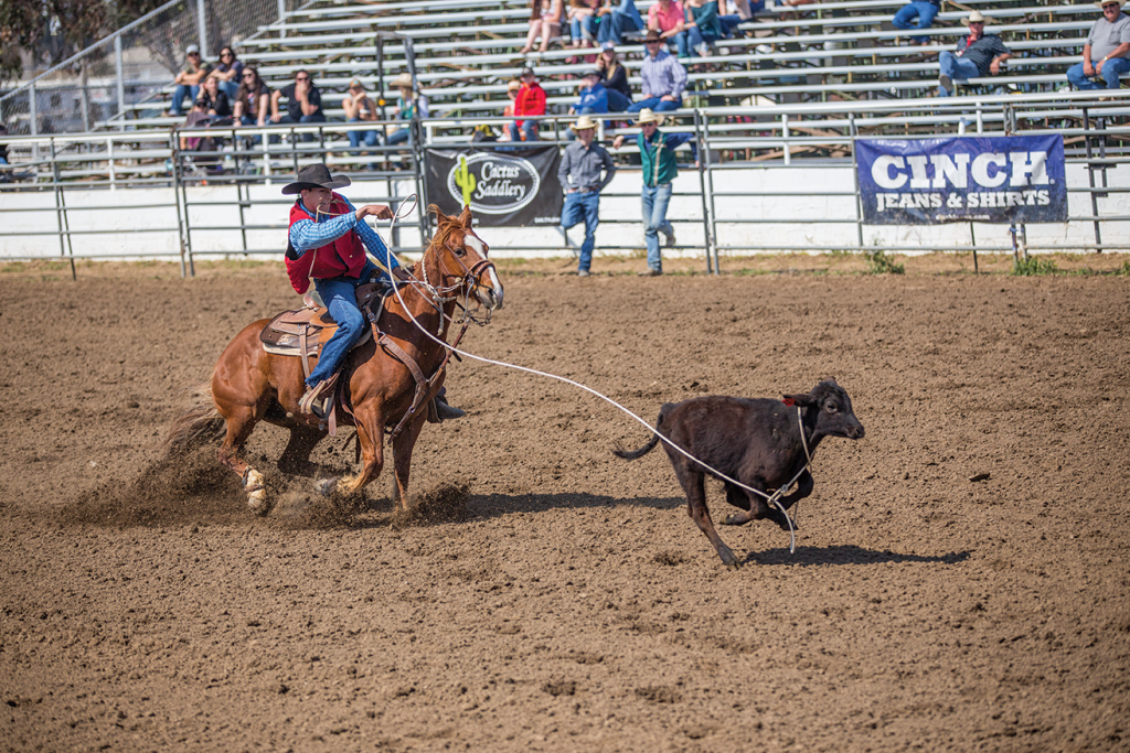 Fresno State Bulldoggers Host Competition At Clovis Rodeo